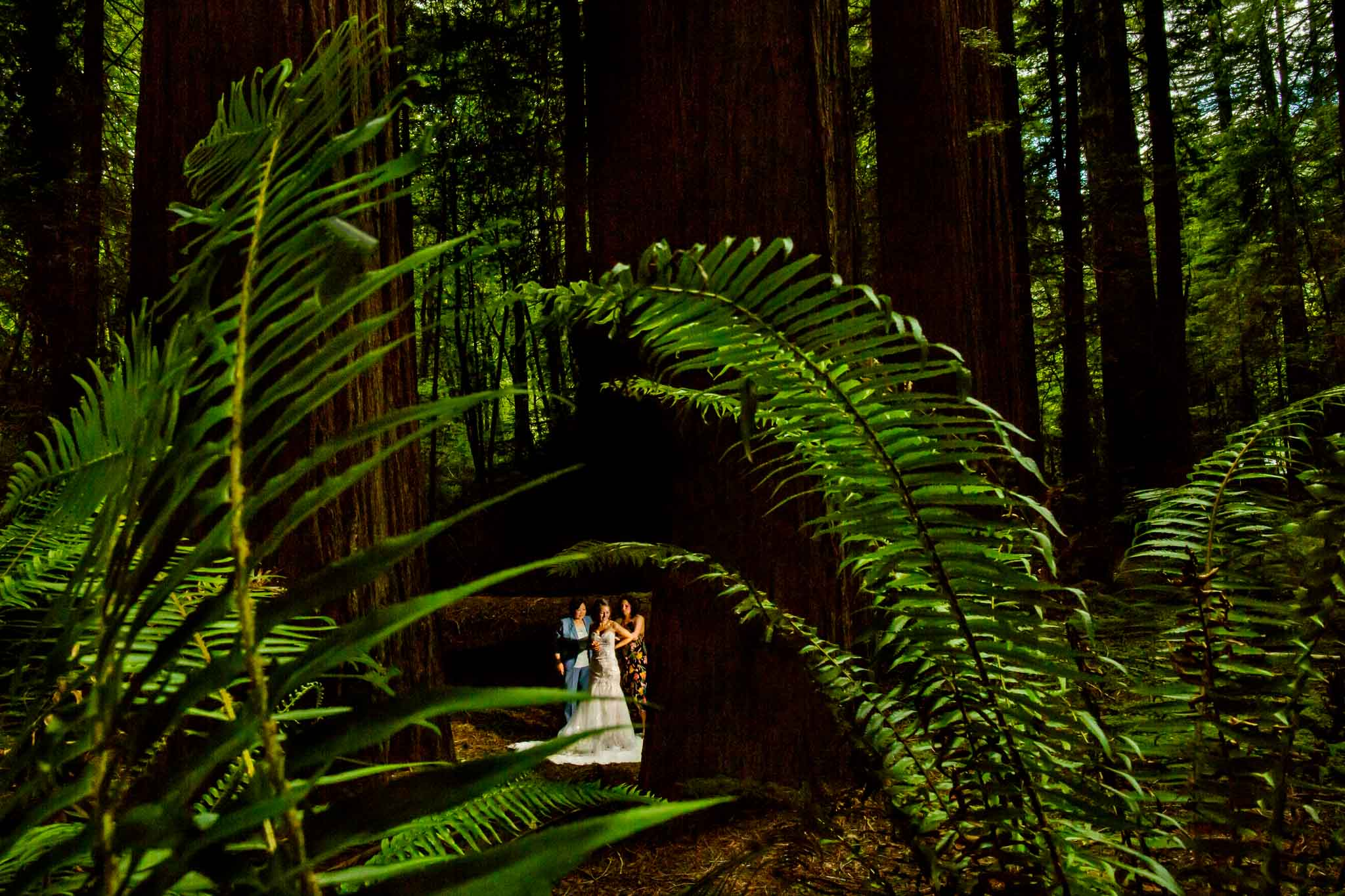 Fearless Photographers Bride getting ready in Redwoods in Avenue of the Giants California Wedding