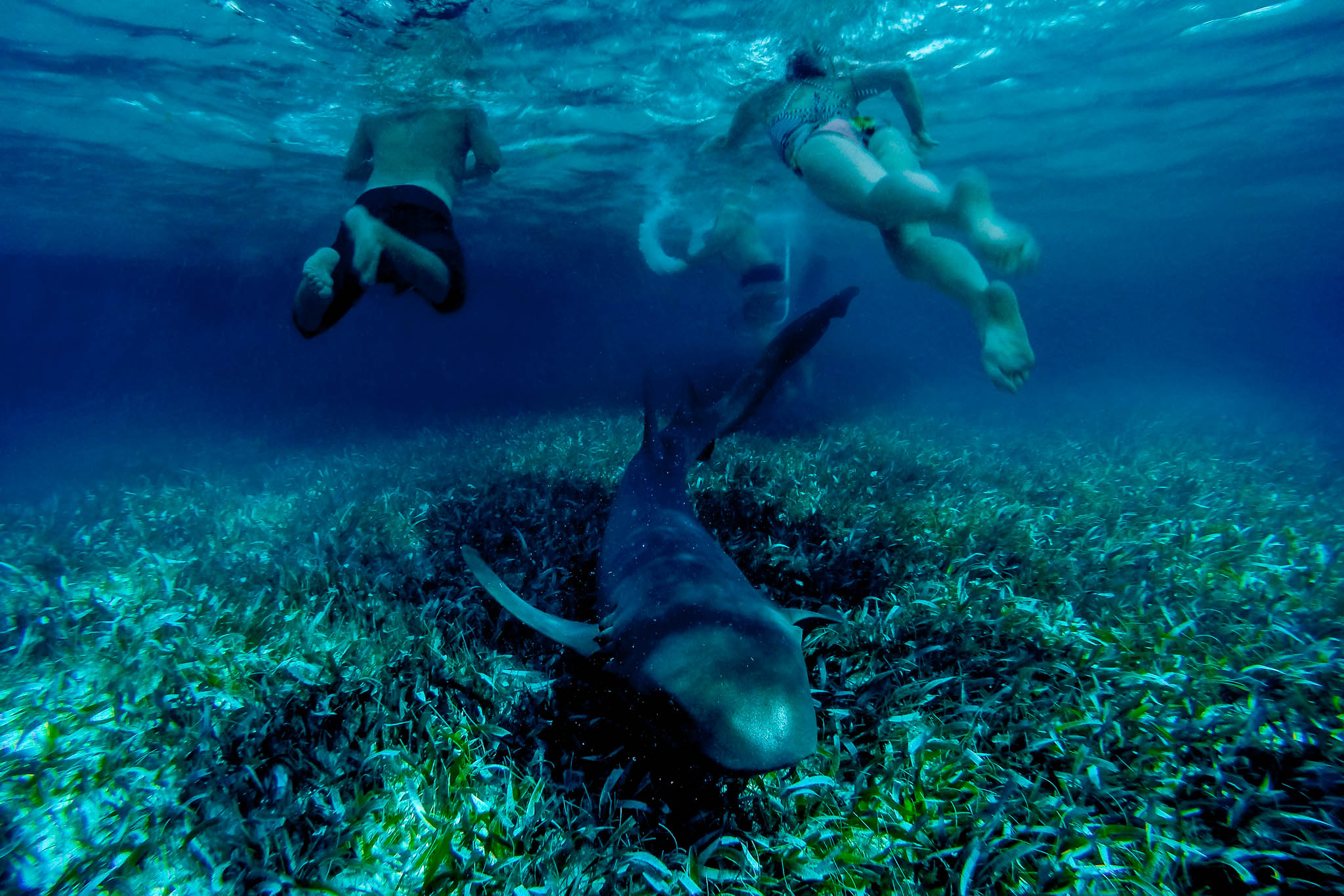 Bride and Groom swimming with shark in Belize near Portofino Beach Resort during their wedding events