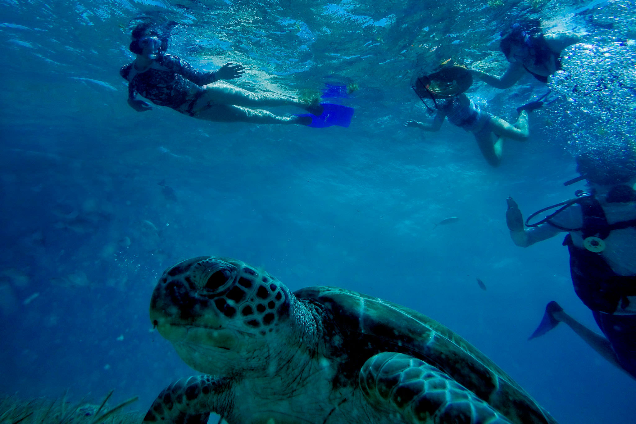 Bride swimming with mother looking at sea turtle in Belize day before wedding