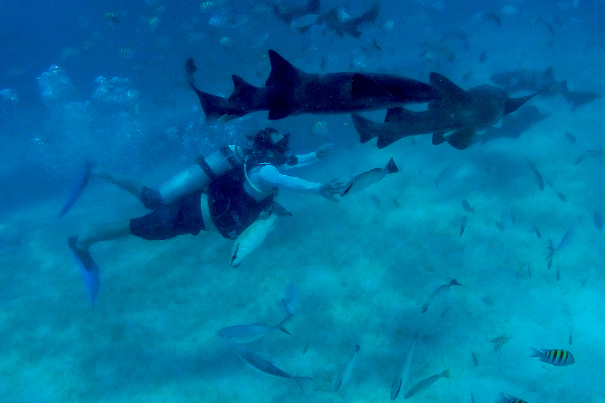 Groom swimming with nurse sharks morning of wedding in Belize at Portofino Beach Resort