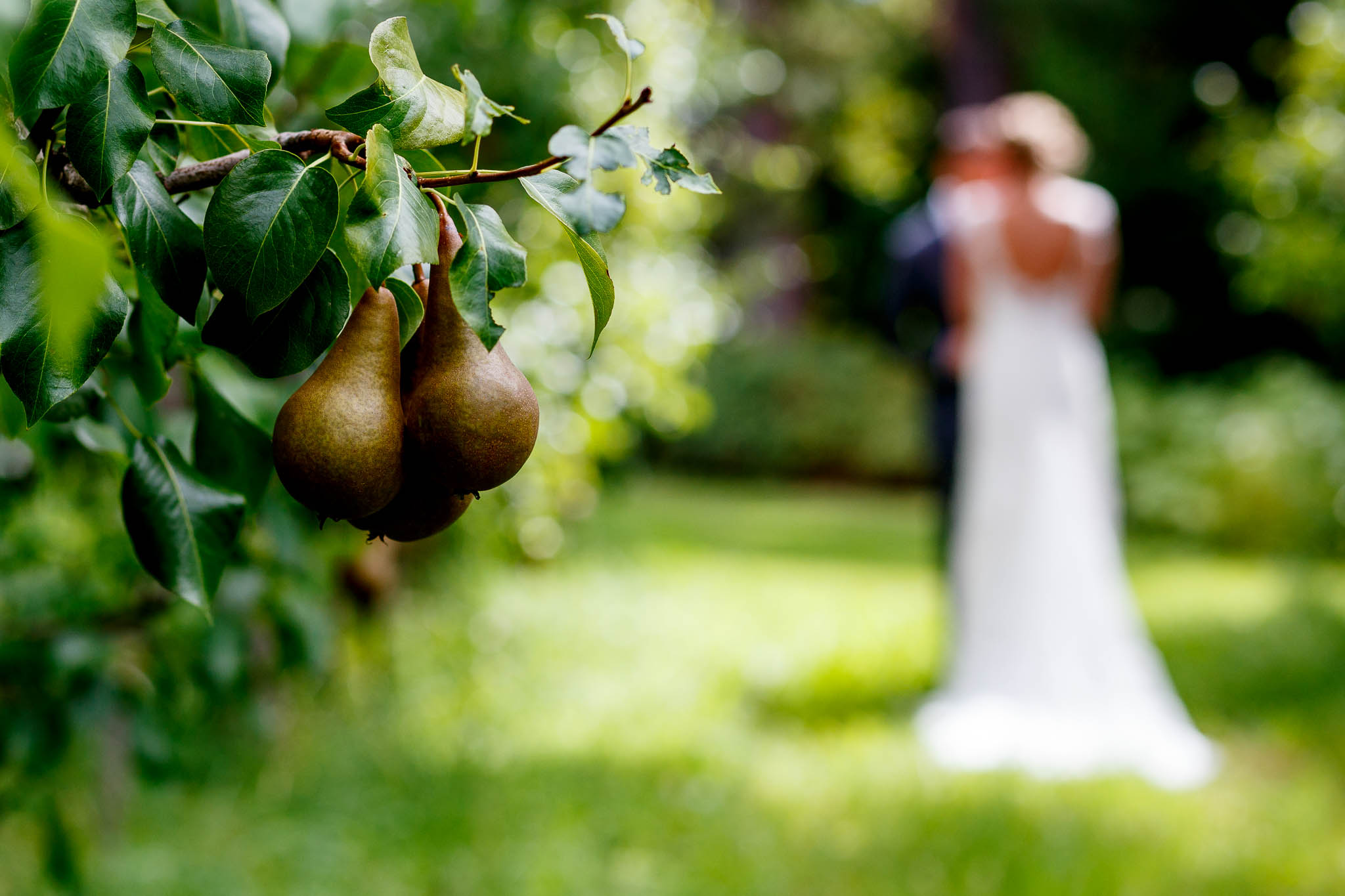 Pears at Mt Hood Organic Farms at Wedding with bride and groom