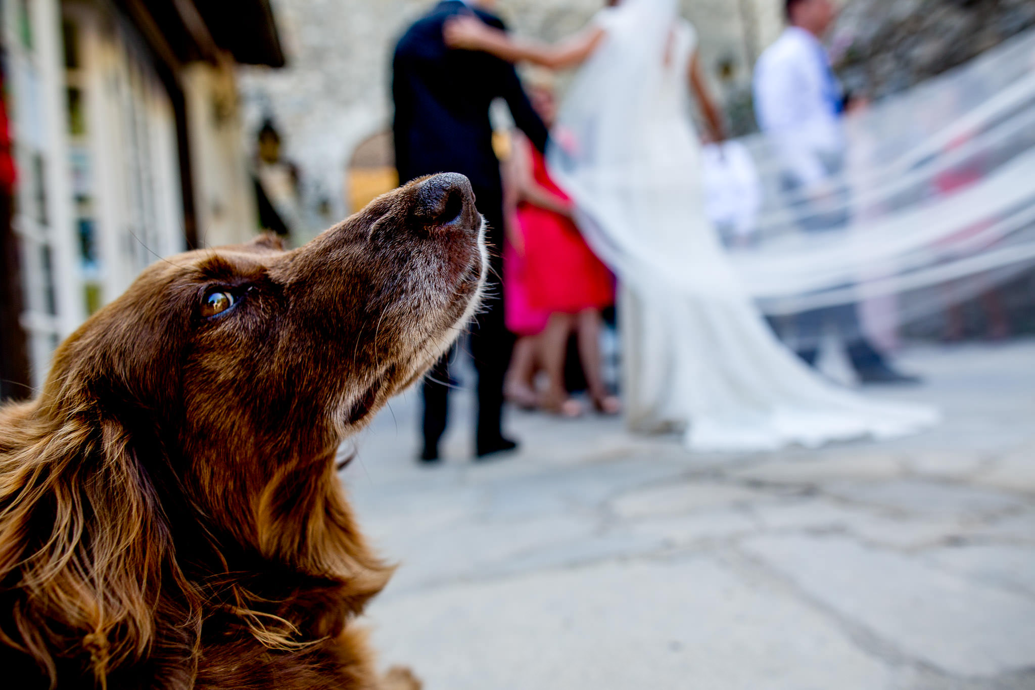 Dog during wedding ceremony Emotional hugging at chateau wedding in Cirque de Navacelles outside Montpellier France